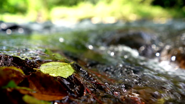 freshwater spring - muschio flora video stock e b–roll
