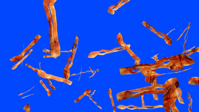 Fried bacon flying in slow motion against Blue Screen Fried bacon flying in slow motion against Blue Screen bacon stock videos & royalty-free footage