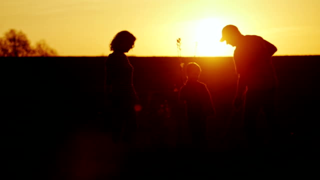 A friendly family plant a tree at sunset. Dad, mom and little son work together. Silhouette video video