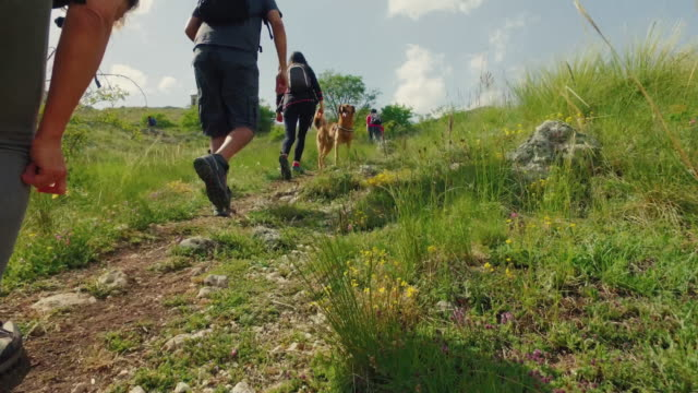friends and dog hiking in italian apennines mountains - национальный парк стоковые видео и кадры b-roll