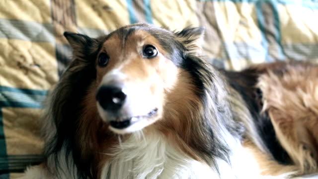 rädd hund - fruktan bildbanksvideor och videomaterial från bakom kulisserna