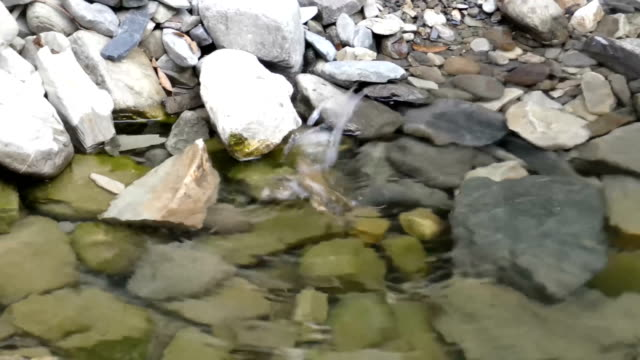 Frog couple playing in pure water on the stones