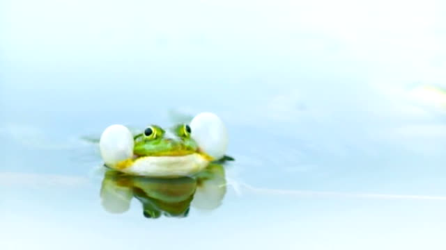 Amphibians stock videos
