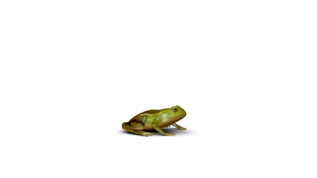 Frog jump animation Frog jump CG animation frog stock videos & royalty-free footage