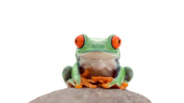 żaba na skale - 20 sekund lub dłużej filmów i materiałów b-roll