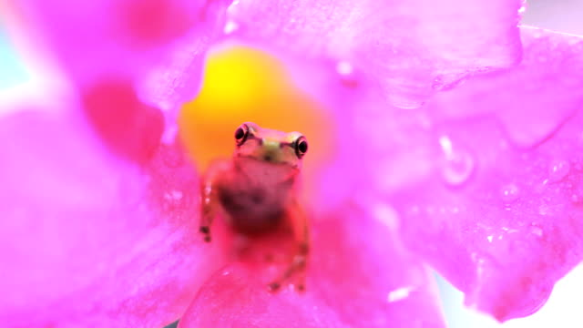 Frog sitting on a flower video