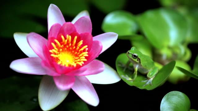 Frog sitting on a leaf video