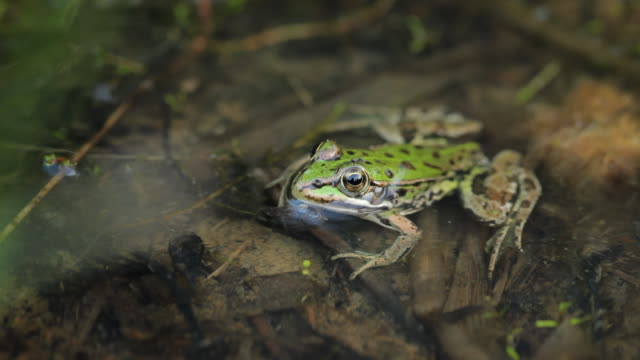 Frog  frog stock videos & royalty-free footage