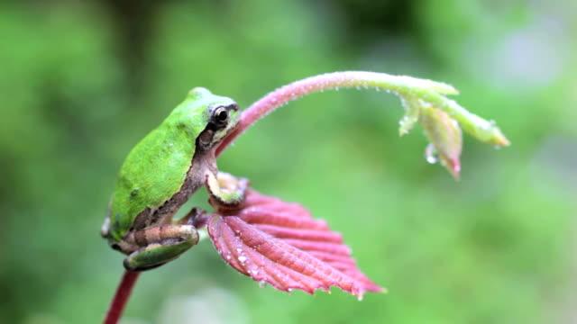 frog video
