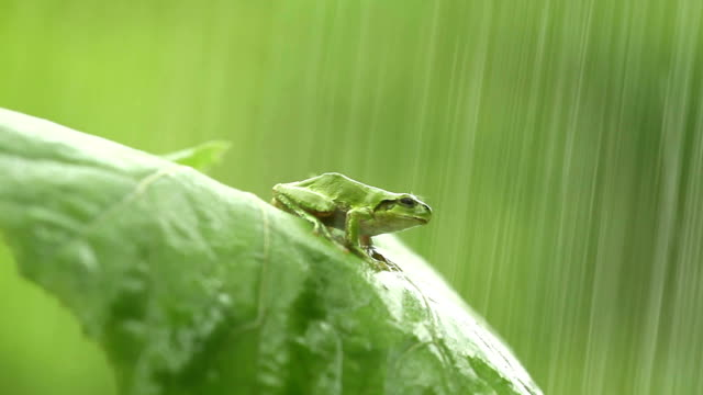 Frog Frog frog stock videos & royalty-free footage