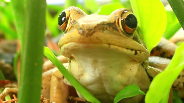 frog frog amphibian stock videos & royalty-free footage