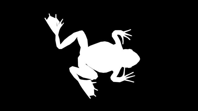 Frog Walking Silhouette (Loopable) Chroma Key amphibian stock videos & royalty-free footage