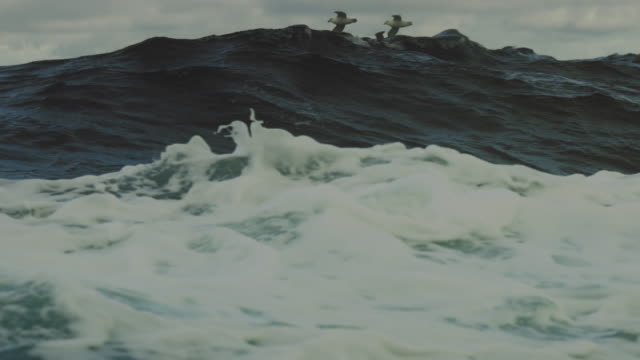 From a vessel in rough sea: birds and waves