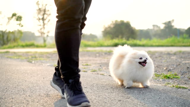 SLO MO - Front View Rear View Running with Dog SLO MO - Walking with Dog purebred dog stock videos & royalty-free footage
