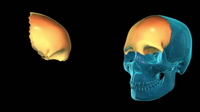Frontal Bone video