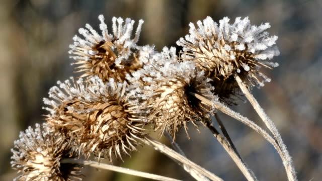 vidéos et rushes de givre sur les plantes - tige d'une plante