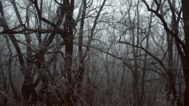gelo su alberi ed erba - albero spoglio video stock e b–roll