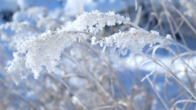 霜に覆われた木、北海道。 - 冬点の映像素材/bロール