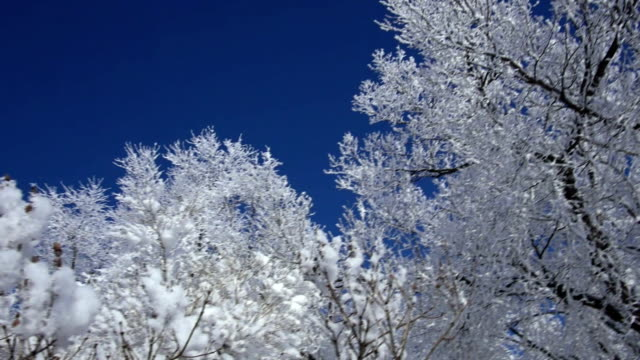 Frost-covered trees in a park CU video