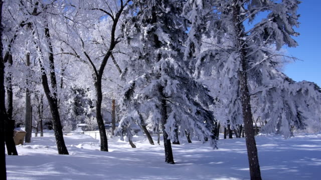 Frost-covered trees in a park winter scene video