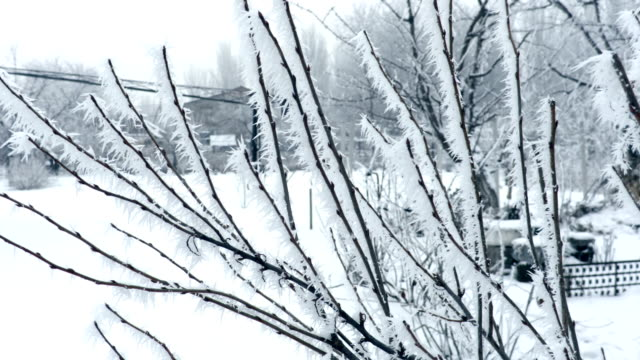 Frosted Branches in Winter video