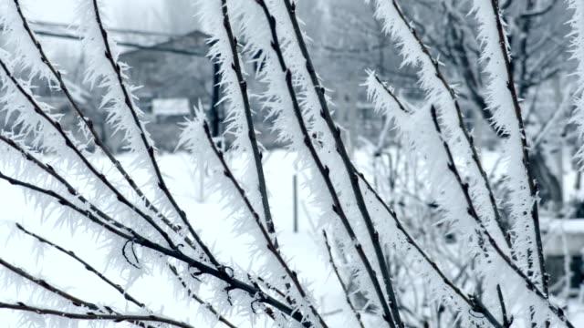 rami smerigliati in inverno - ice on fire video stock e b–roll