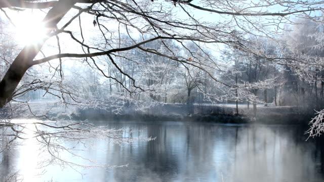 frosty and sunny winter scenery - brina ghiaccio video stock e b–roll