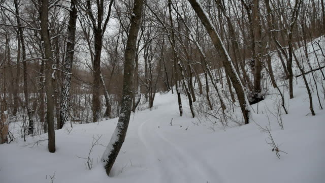 frosty dry nature tree branches winter landscape in snowy outdoors the forest Russia - vídeo