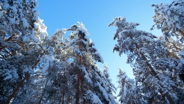 frosty winter landscape in snowy forest video