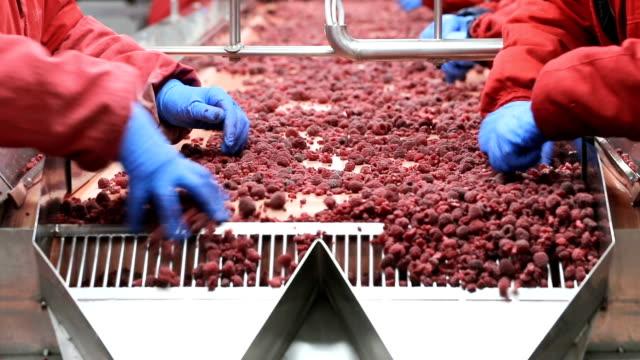 fryst mat industrin - livsmedelstillverkningsfabrik bildbanksvideor och videomaterial från bakom kulisserna