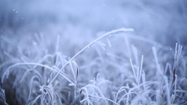 gefrorenes gras - laub winter stock-videos und b-roll-filmmaterial