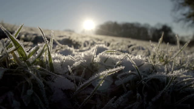 Frozen Ground A shot of a frozen field on a sunny day in the middle of winter. blade of grass stock videos & royalty-free footage