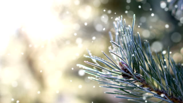 frozen harmony - loopable - snowflake background stock videos & royalty-free footage