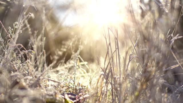 冷凍ハーモニー-冬の日の出 ビデオ