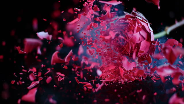 SLO MO Frozen red rose shatters on the black surface video