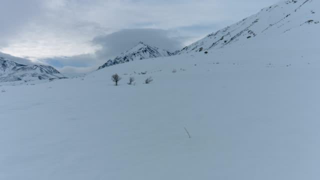 frozen sierra tundra - brent video stock e b–roll