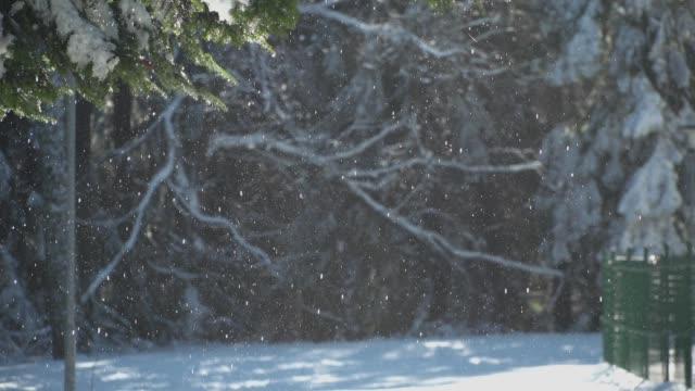 frusen snö faller från frysta träd - steiermark bildbanksvideor och videomaterial från bakom kulisserna