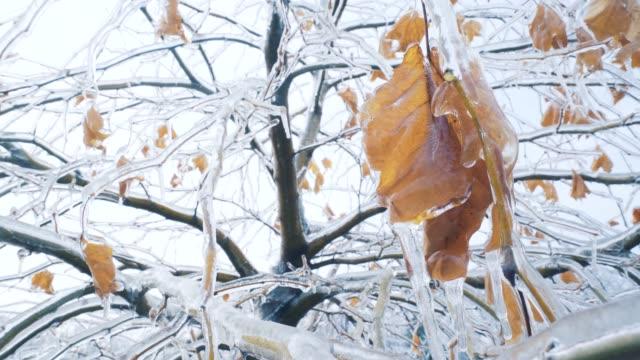 donmuş ağaç. - donmuş su stok videoları ve detay görüntü çekimi