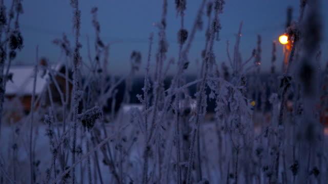 冬にイラクサの小枝を凍結 - 霜点の映像素材/bロール