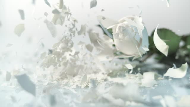 slo mo fryst vit ros krossar på den vita ytan - white roses bildbanksvideor och videomaterial från bakom kulisserna