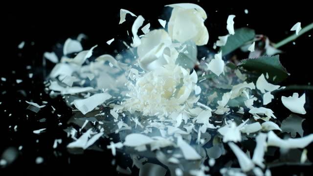 slo mo och ld fryst vit ros smashing på svart yta - white roses bildbanksvideor och videomaterial från bakom kulisserna