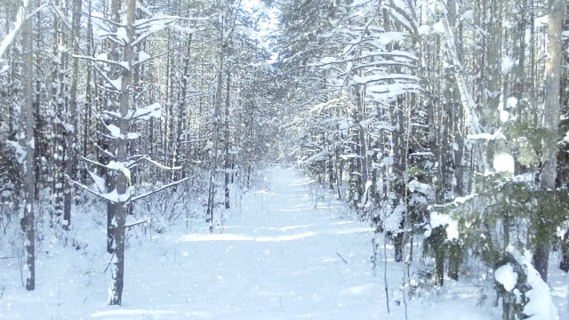 AERIAL Frozen winter forest dense, forest thicket, with nice snowfall and sun dolly zoom effect