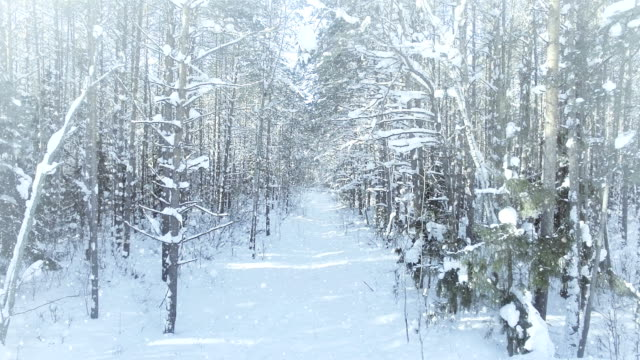 AERIAL Frozen winter forest dense, forest thicket, with nice snowfall and sun 4k uhd