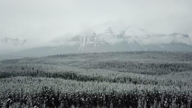 замороженный зимний лес - хвойное дерево стоковые видео и кадры b-roll