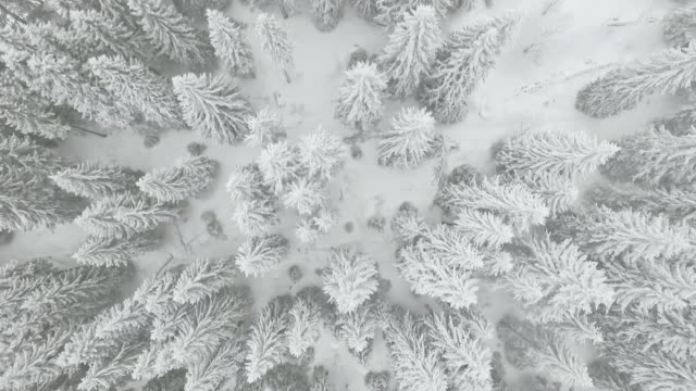 frozen winter forest - trees in mist stock videos & royalty-free footage