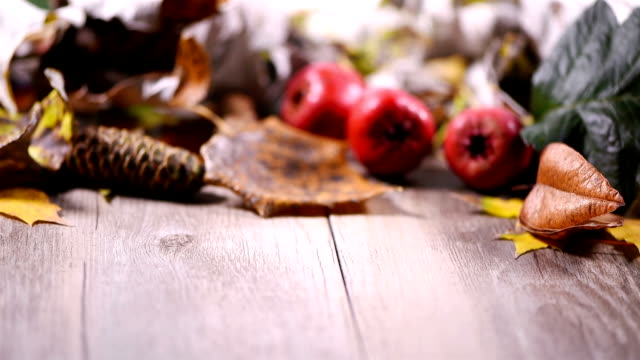 Fruit and deciduous, video. video