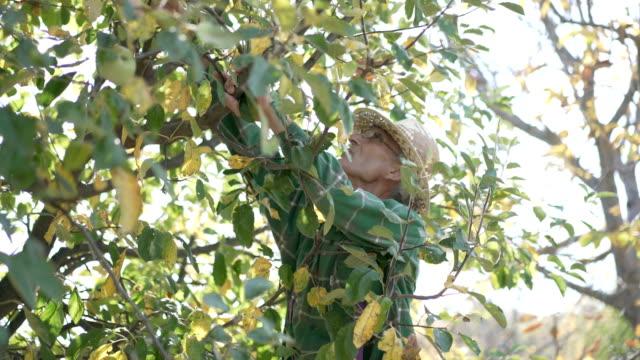 Fruit Picking video
