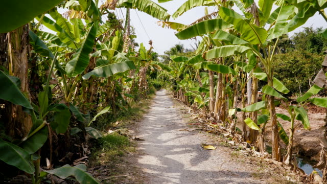 Fruit plantations in the Mekong Delta video