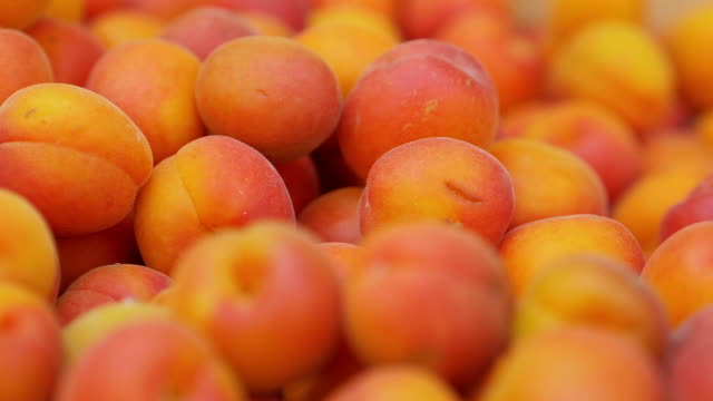 fruit, summer, health.just picked fresh apricots - albicocca video stock e b–roll