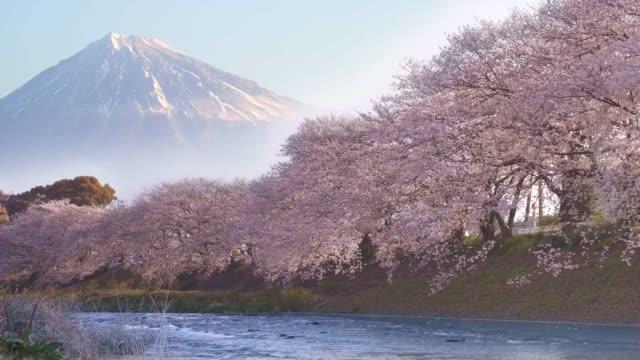富士、満開の日本の桜と朝日が輝く日本の風景潤井川の ryuugan ・ buchi - 桜点の映像素材/bロール